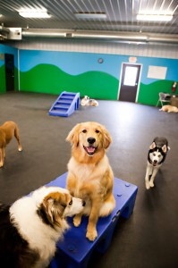 Noblesville dog daycare fishers in doggie daycare competitive dog care prices solutioingenieria Gallery