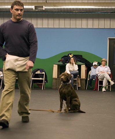 Dog Dayz Training