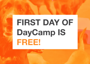 First day of DayCamp is FREE!